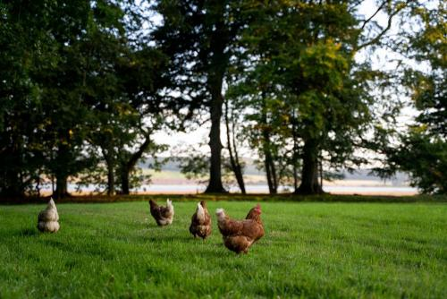 Chickens at Seasyde